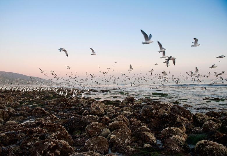 Seagulls flying over rocky beach