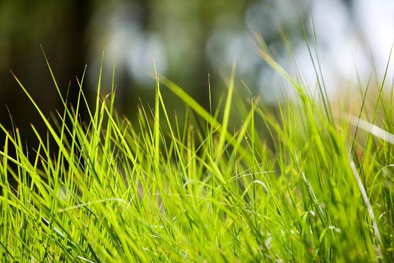 Blades of grass, close-up