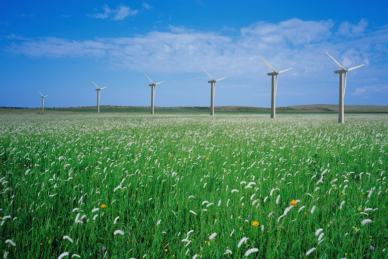 A Row of Windmills