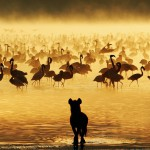 Hyena Looking at Flamingos in South Africa