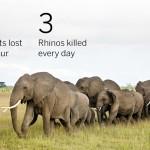 ゾウ・サイの密猟の実体