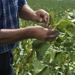 agri disease